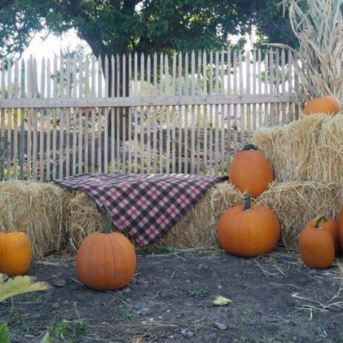 pumpkins-hay-bales